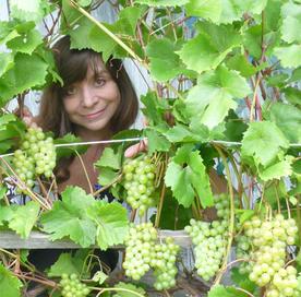 Конференция «Эко-виноград 2017» пройдёт в «Аптекарском огороде» 18 февраля