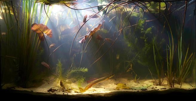 День высокой аквариумистики пройдёт в «Аптекарском огороде» 24 сентября