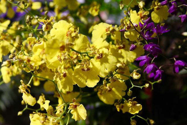8 апреля — финал фестиваля орхидей «Тропическая зима» в «Аптекарском огороде»