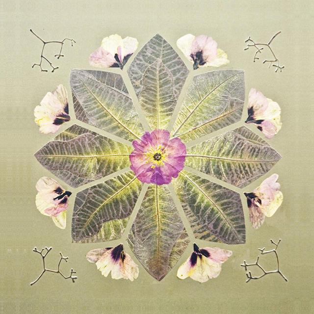 Цикл мастер-классов «Геометрия природы» начнётся 20 апреля в «Аптекарском огороде»