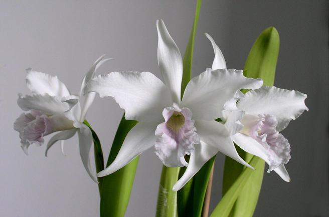 Лекция по ароматерапии «Аромат орхидеи» пройдёт 23 декабря в «Аптекарском огороде»