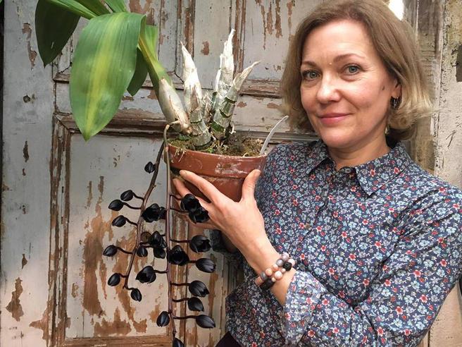 Самая чёрная орхидея в мире снова расцвела в «Аптекарском огороде»
