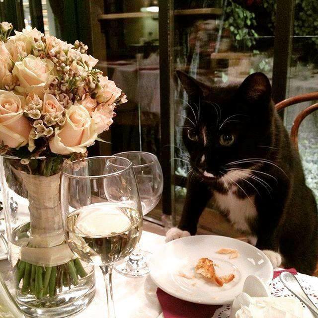 Главному Цветочному коту «Аптекарского огорода» подарили пирог в виде кота