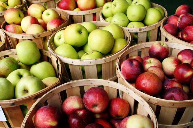 Дегустации яблок в «Аптекарском огороде»
