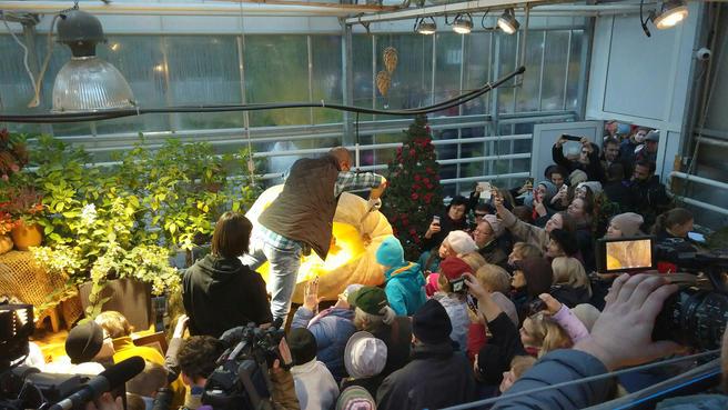 Семена самой большой тыквы в России разыгрывают в честь Хэллоуина в «Аптекарском огороде»