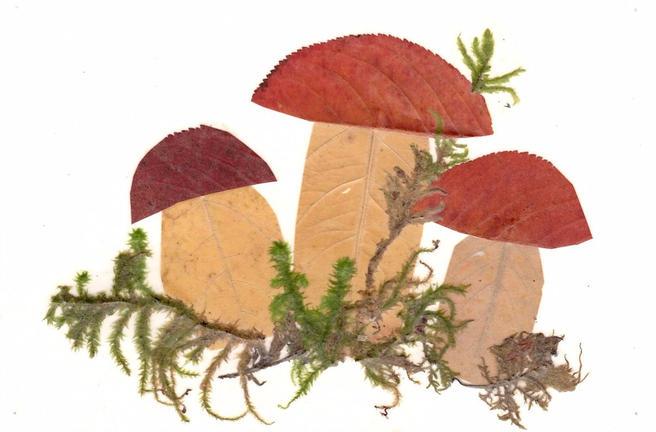 Открытки с грибами из мха научат делать 8 и 9 октября в «Аптекарском огороде»