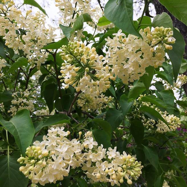 В честь Дня летнего солнцестояния мастер-класс «Экология речи» в «Аптекарском огороде» перенесли на 21 июня