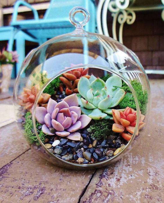 10 июня — мастер-класс «Домашний сад из суккулентов» в «Аптекарском огороде»
