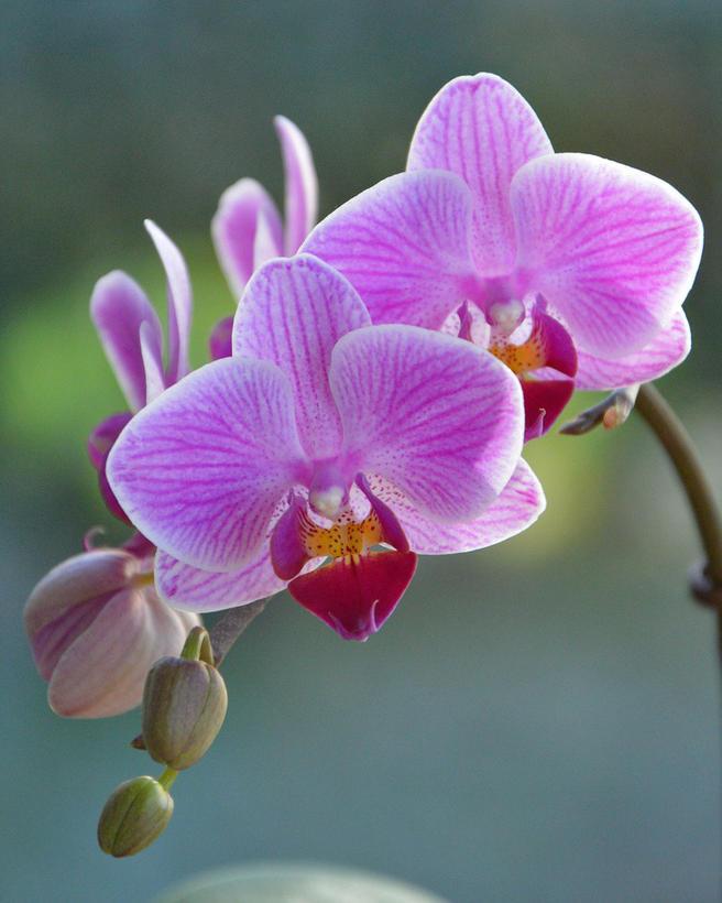 Бесплатный мастер-класс «Пересадка орхидей-мотыльков» пройдёт 20 января в «Аптекарском огороде»