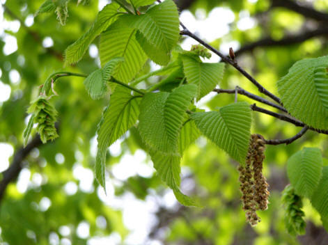 Дальневосточный сад появится в «Аптекарском огороде»