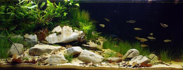 10 апреля — День биотопных аквариумов в «Аптекарском огороде»