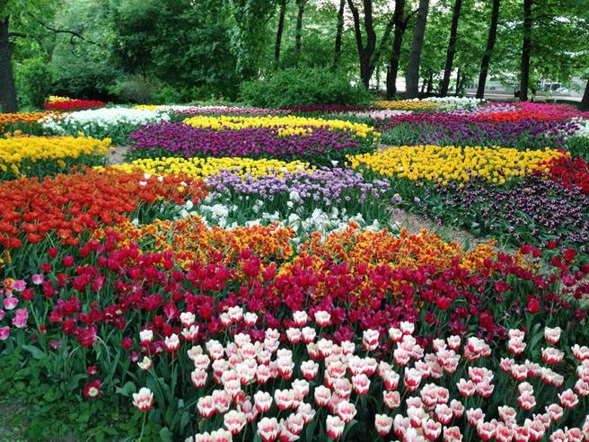 XVII Весенний фестиваль цветов в «Аптекарском огороде» пройдёт с 15 апреля до 1 июня