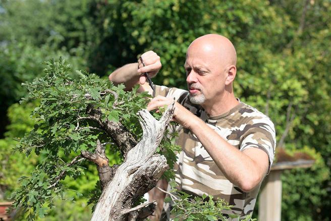Выставка «Бонсай — миниатюрные пейзажи из живых российских деревьев» пройдёт с 12 по 19 мая в «Аптекарском огороде»