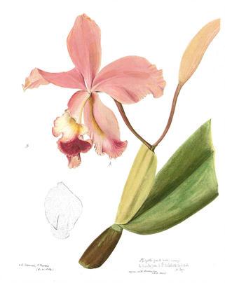 Гербарий из орхидей научат делать 23 ноября в «Аптекарском огороде»