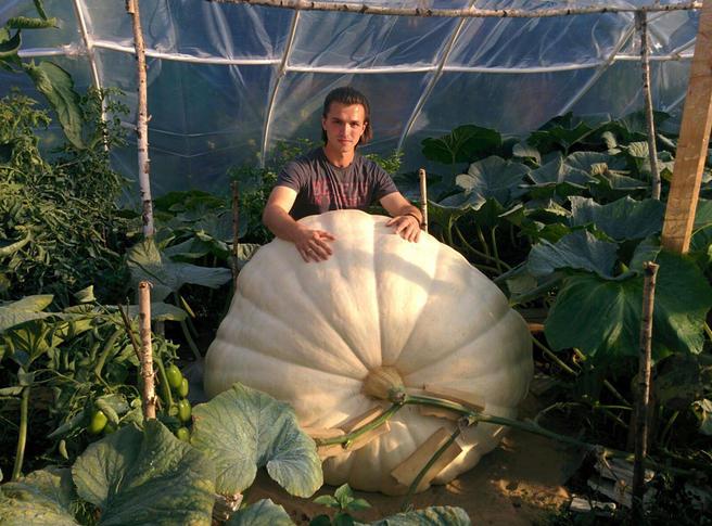 Самую большую тыкву в России весом свыше 400 кг представят 5 сентября в «Аптекарском огороде»