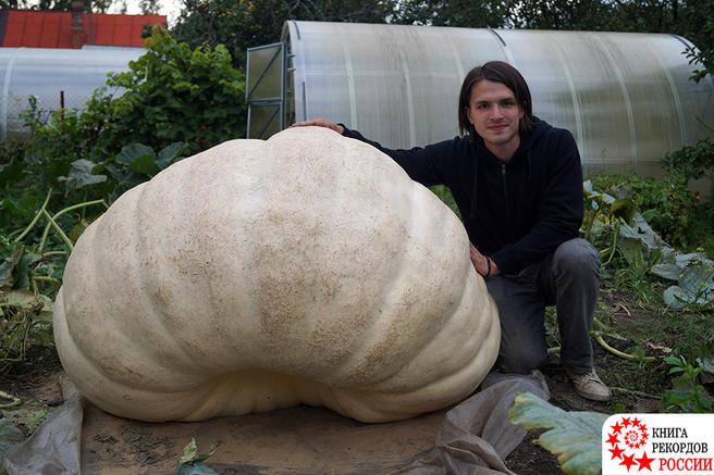 Гигантская царь-тыква из «Аптекарского огорода» весом свыше 430 кг была официально признана самой большой тыквой в России
