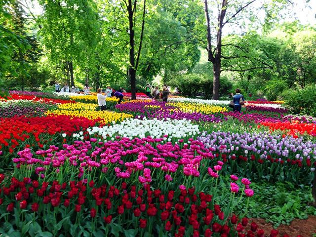 С 14 апреля по 3 июня — XVIII Весенний фестиваль цветов в «Аптекарском огороде»