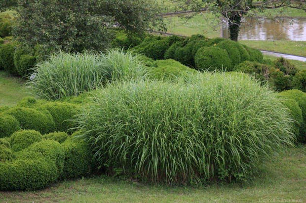 21 февраля в «Аптекарском огороде» расскажут об ивах и травах для Подмосковья
