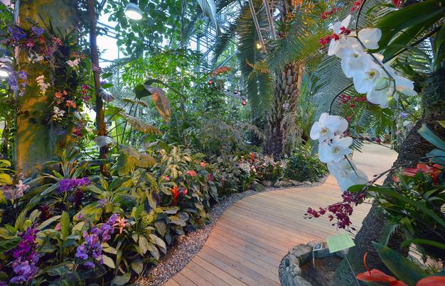2 апреля завершатся экскурсии «Прекрасные и ужасные тропики» в «Аптекарском огороде»