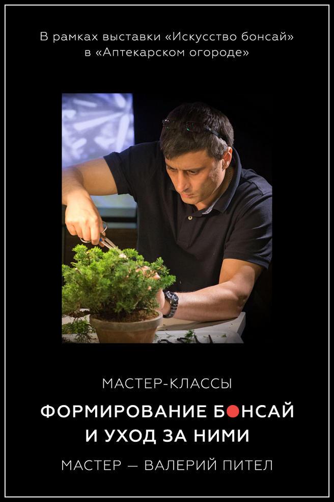 Мастер-классы владельца самой большой коллекции бонсай в России пройдут 6, 13, 20 и 27 января в «Аптекарском огороде»