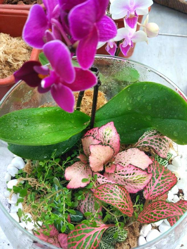 Мастер-класс «Садик из тропических растений» пройдёт 18 мая в «Аптекарском огороде»
