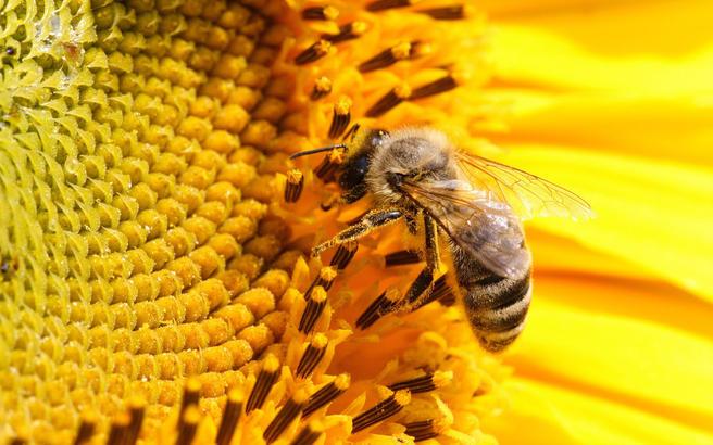 Семинар о пчеловодстве пройдёт 17 февраля в «Аптекарском огороде»