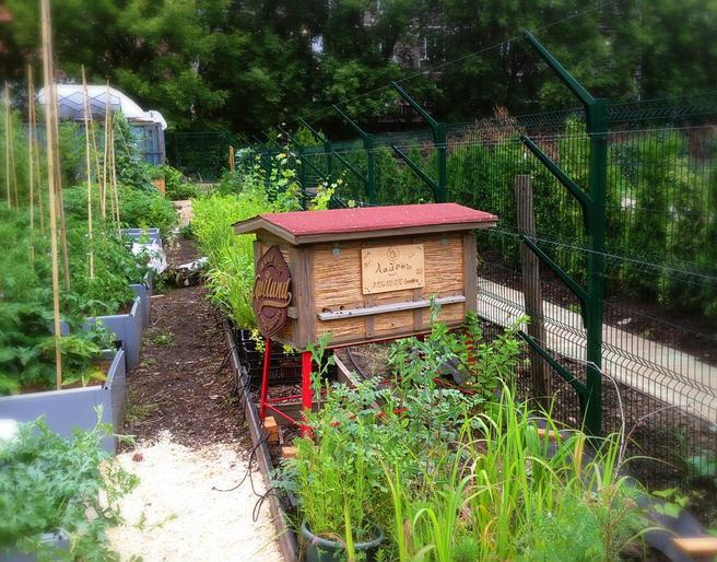 10 тысяч пчёл в «Аптекарском огороде» подготовили к зимовке