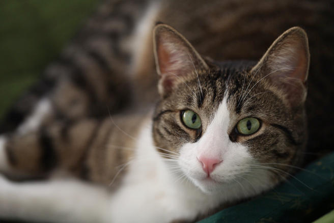 Котокафе «Котики и люди» будет открыто в «Аптекарском огороде» с 29 по 31 августа