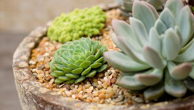 5 марта — консультации по составлению композиций из кактусов и других суккулентов в «Аптекарском огороде»