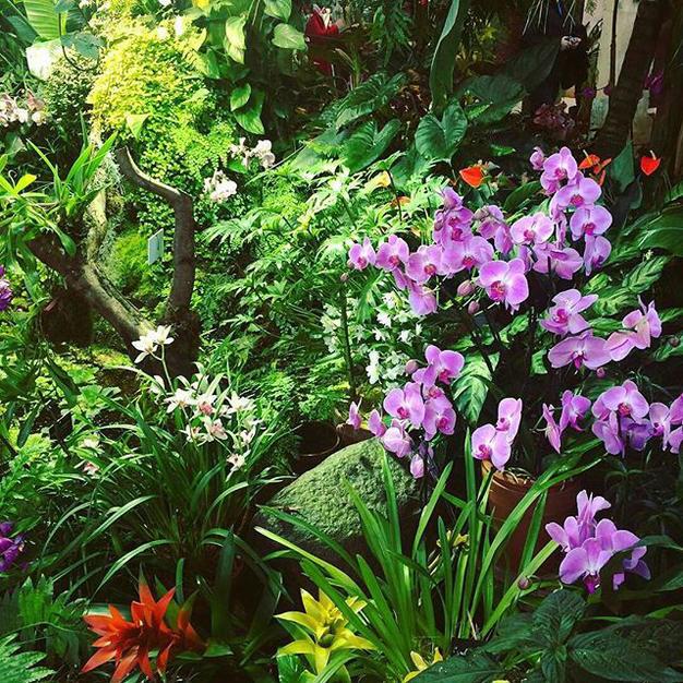В начале апреля «Аптекарский огород» приглашает в «Путешествие с ботаником»