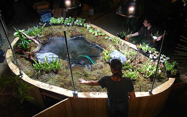 Создание экспозиции «Тропическое болото»