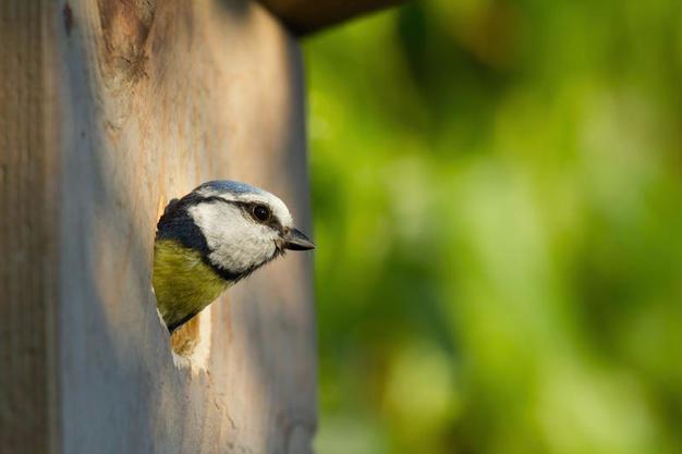 В честь Международного дня птиц в «Аптекарском огороде» повесили скворечники
