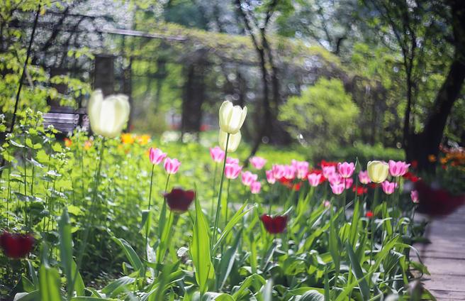 С 12 мая «Аптекарский огород» работает на 1 час дольше