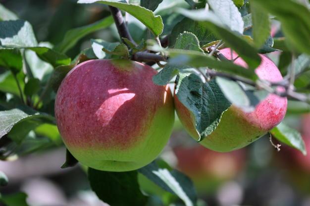 Занятия по плодоводству начнутся с 3 февраля в Ботаническом саду МГУ на Воробьёвых горах