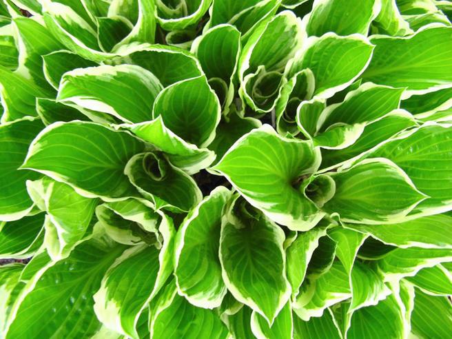 С 28 по 30 июня — выставка папоротников и других садово-декоративных растений в «Аптекарском огороде»
