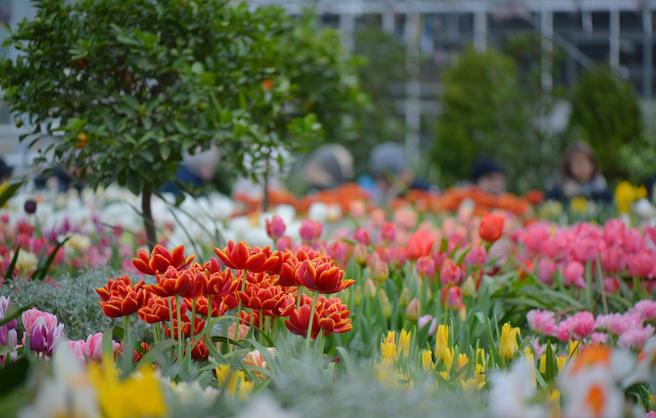С 23 по 26 февраля — «Цветочная Масленица» с блинами, сырами, тюльпанами и чучелом в «Аптекарском огороде»