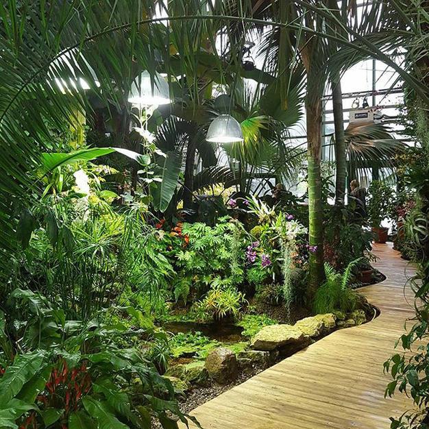26 и 27 марта — экскурсии по тропикам, пустыне и полянкам с подснежниками в «Аптекарском огороде»