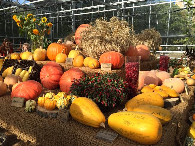 В День города в «Аптекарском огороде» стартуют «Сытные выходные»