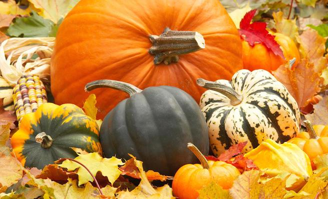 Итоги акции «Тыква к Хэллоуину!» в «Аптекарском огороде»