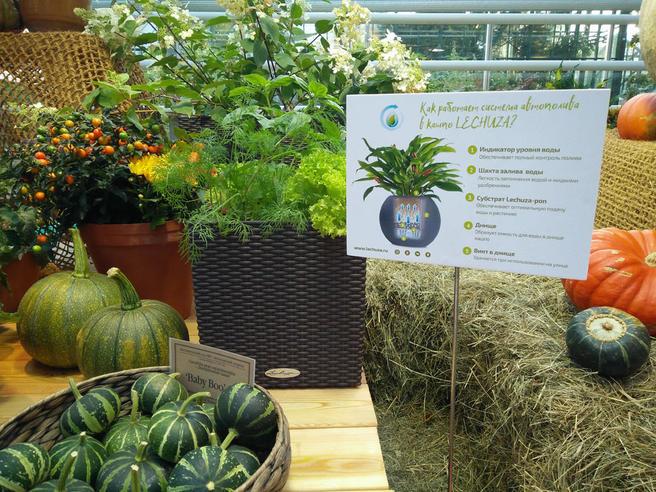 30 кашпо с автополивом от LECHUZA представлены на выставке «Мир! Труд! Урожай» в «Аптекарском огороде» до 15 октября