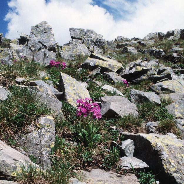 19 марта в «Аптекарском огороде» расскажут о флоре Кавказа, Курил и Сахалина