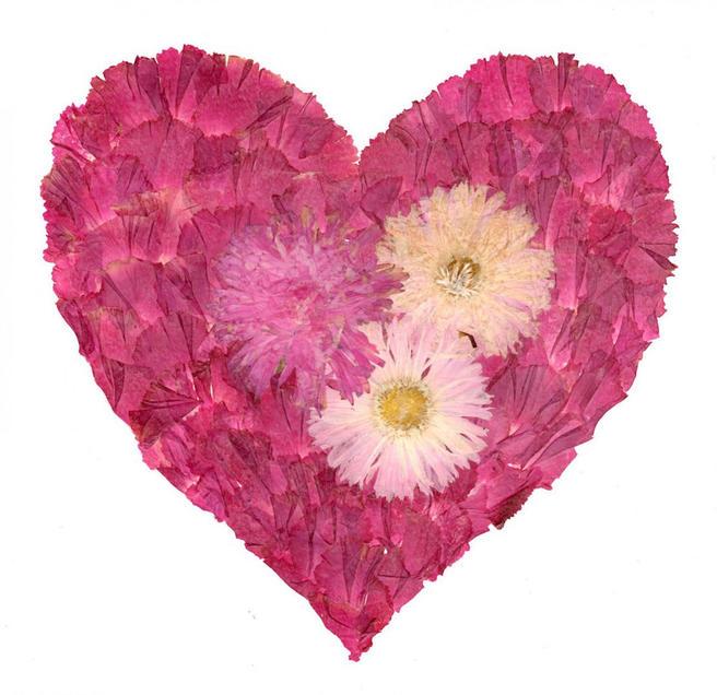 Сердца из хризантем и астр научат делать 14 сентября в «Аптекарском огороде»