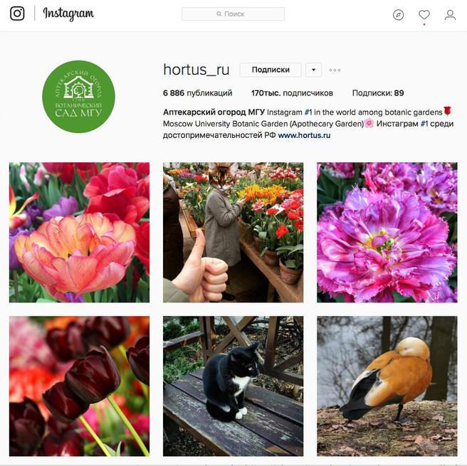 Инстаграм «Аптекарского огорода» стал самым популярным среди всех достопримечательностей России