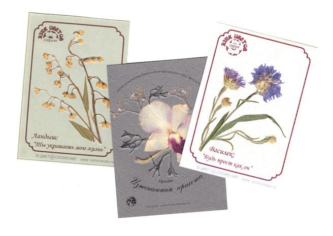 Мастер-классы по созданию открыток из цветов в «Аптекарском огороде» стали ежедневными