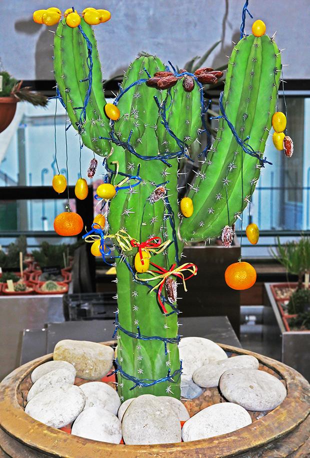 Мексиканская ёлка-кактус