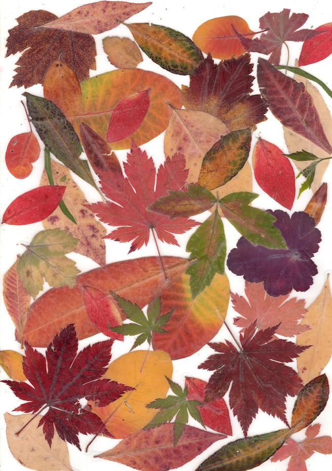 2 и 9 ноября в «Аптекарском огороде» пройдёт «Праздник листопада»