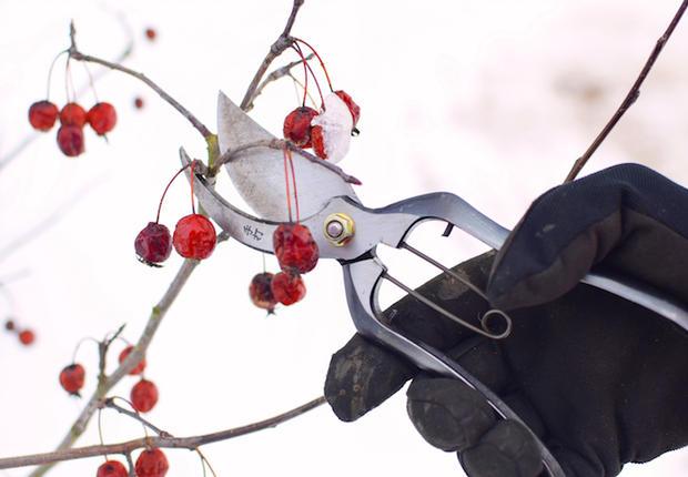 19 марта — мастер-класс по ранневесенней обрезке плодовых и декоративных культур в «Аптекарском огороде»