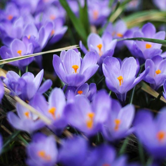 Главные события в «Аптекарском огороде» с 30 апреля до 6 мая