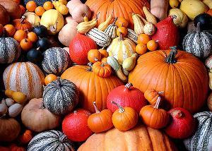 Бесплатная раздача тыкв состоится в «Аптекарском огороде» 11 октября