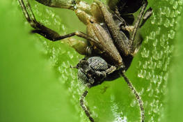 29, 30, 31 марта — мастер-класс «Секреты хищных растений» в «Аптекарском огороде»